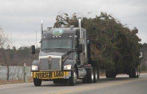 capital christmas tree truck