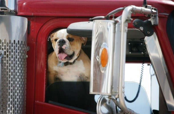things to know when truck driving with a pet